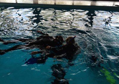 Nitrox Divers szkoła nurkowania, kursy pierwszej pomocy EFR